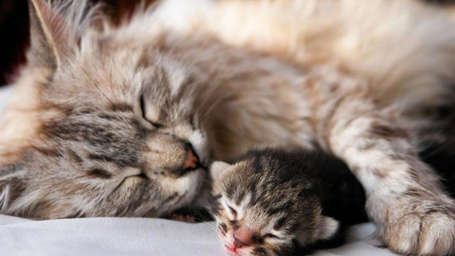 Mamma gatta aspetta i suoi micini (come aiutarla)!