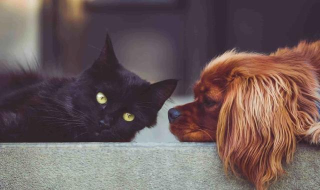 Salute di Fido e Micio: ma quanto mi costa?