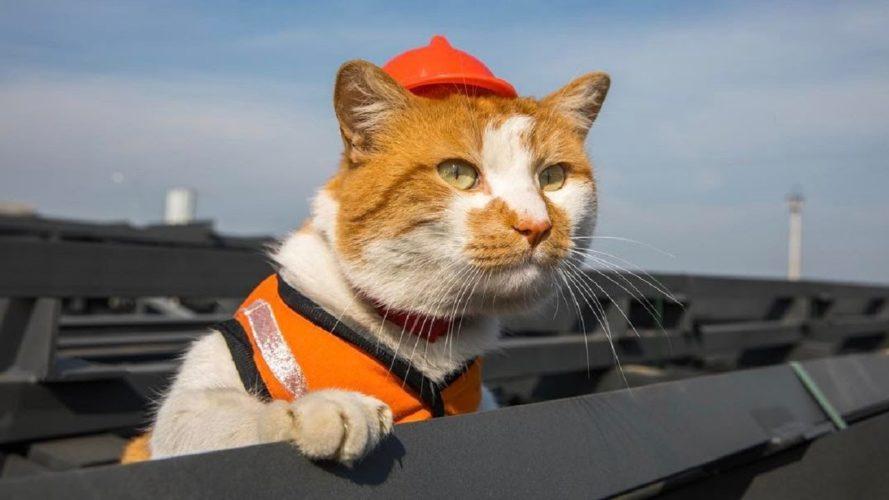 La Russia ha una nuova stella: il gatto Mostik!