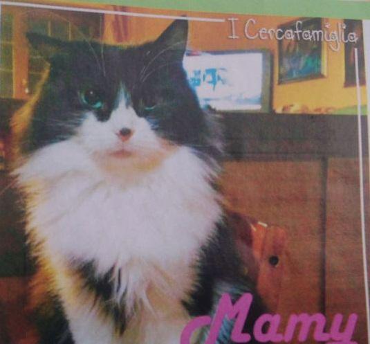 AAA: cercasi casa/famiglia per Mamy!
