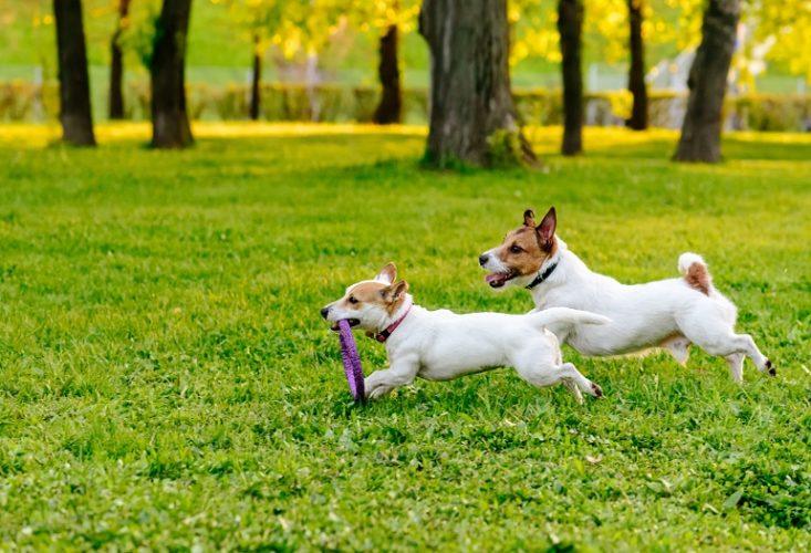 Ieri il mio cane ha giocato con un altro cane al parco e solo quando sono tornato a casa ho scoperto da amici che quel cane aveva la leishmaniosi. Mi sono molto preoccupata: l'avrà presa anche il mio cane?
