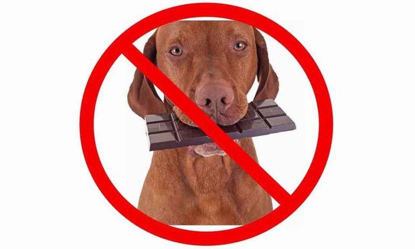 Cioccolato e dolcificanti: vietato darli a cani e gatti!