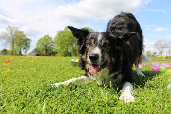 Il consiglio dell'esperto: diverti il cane stimolando la sua mente!