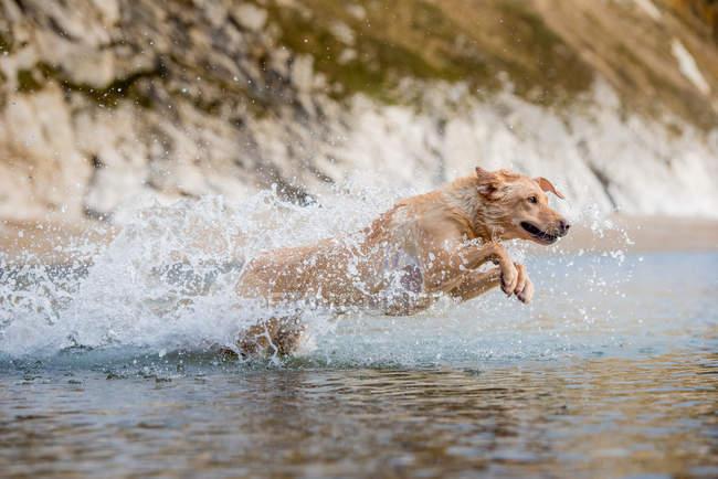 Buongiorno, lo scorso settembre ho preso un cucciolo di labrador. Quest'anno vorrei portarlo al mare insieme a noi. Siccome non è abituato a stare in spiaggia, potrebbe darmi qualche suggerimento su come fargli prendere confidenza con questo ambiente?