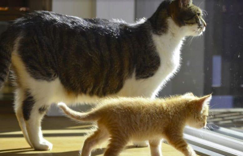 Alimentazione del gatto: da gattino ad anziano, cambiano le necessità!