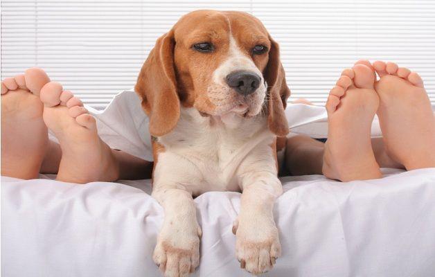 Oscar Grazioli: ma dormire con il cane, fa bene?
