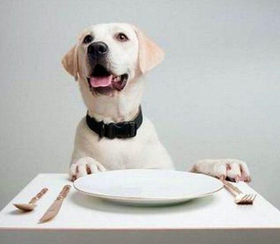Biscotti fatti in casa a forma di cuore per il tuo cane!