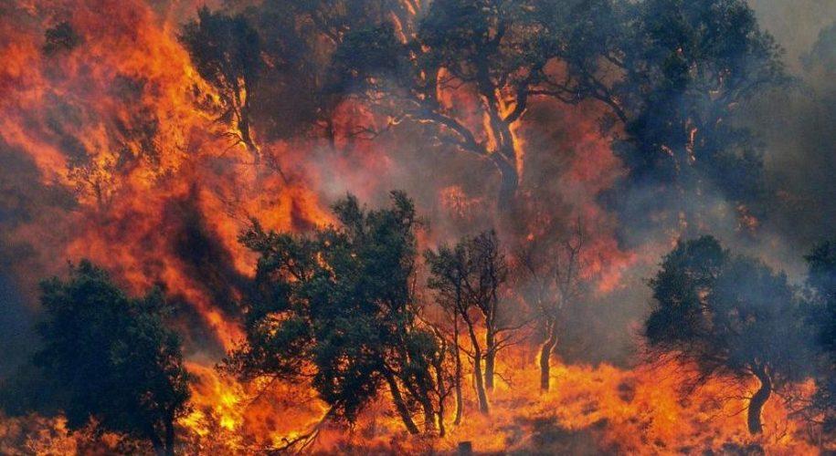 Incendi boschivi: uomo, cerca di essere più responsabile!