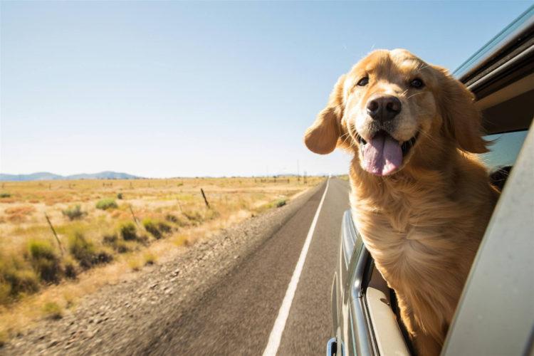 In vacanza con il pet: cosa mettere nella valigia?