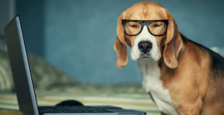 Il 21 giugno è stata la giornata mondiale del cane in ufficio!