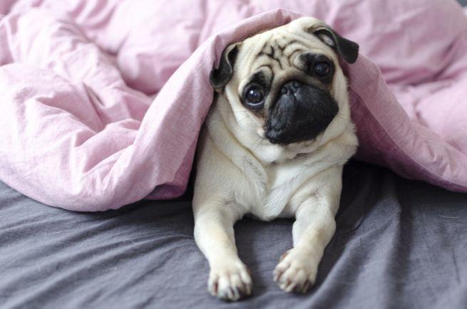Dormire con il cane: è sicuro?