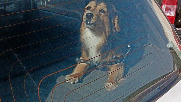 Cani chiusi in auto, che cosa si può fare?