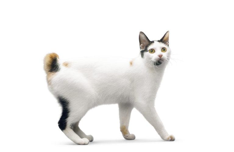 Gatti con la coda a pon pon...