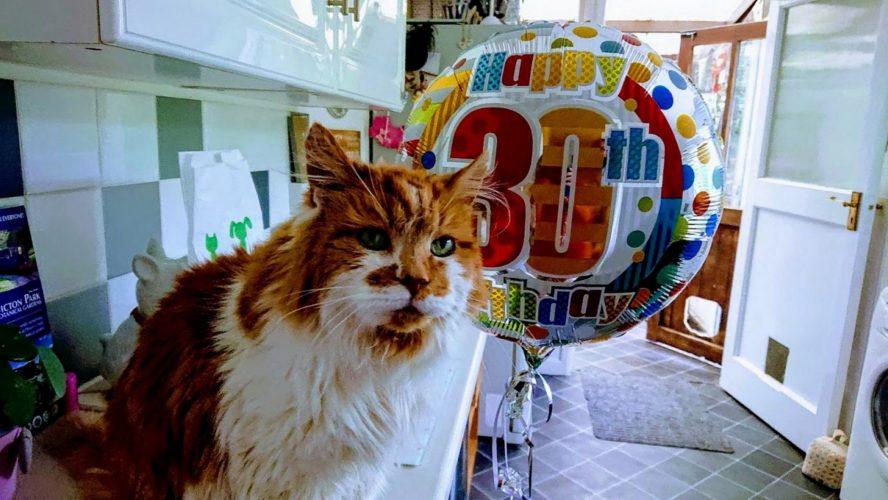 Rubble: il gatto più vecchio del mondo!