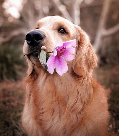 Cani: i tumori mammari (cosa sono, cosa fare)!
