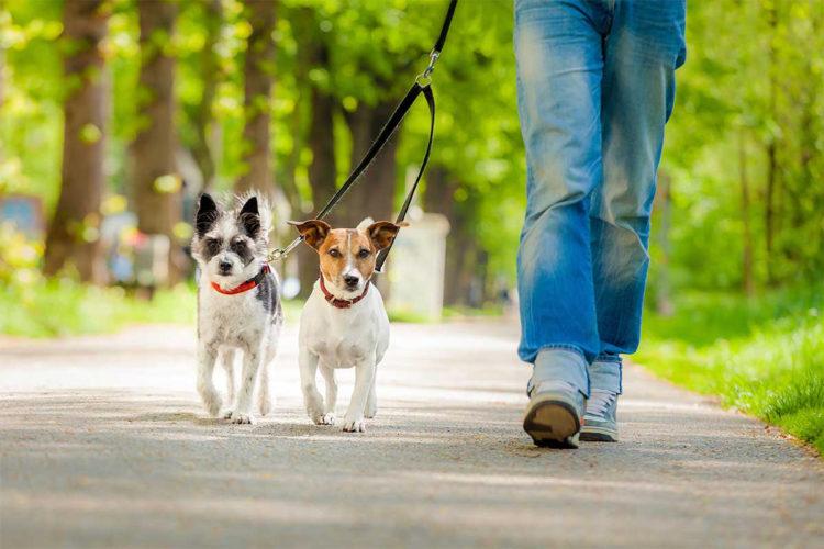 Lavorare con gli animali: il dog sitter!