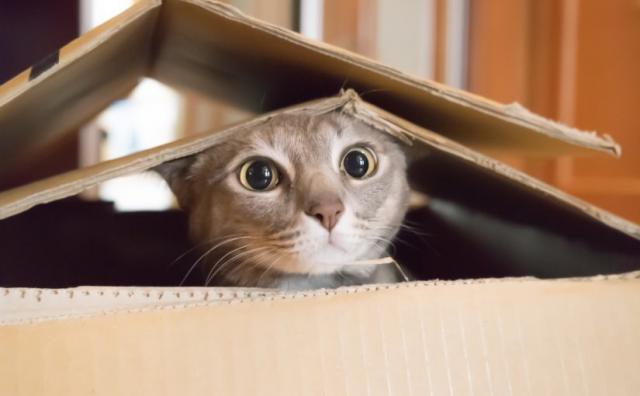 Perché i gatti amano le scatole? Quello che il vostro micio non dirà mai...