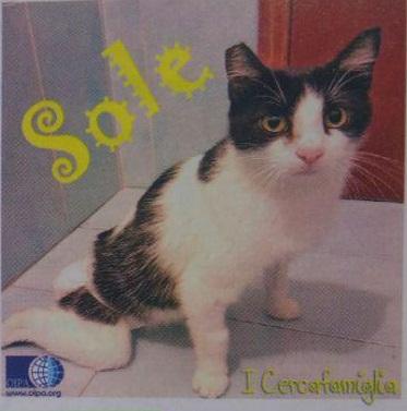 """""""Sole"""" è una gattina doppiamente sfortunata, aspetta te per ricominciare a vivere!"""