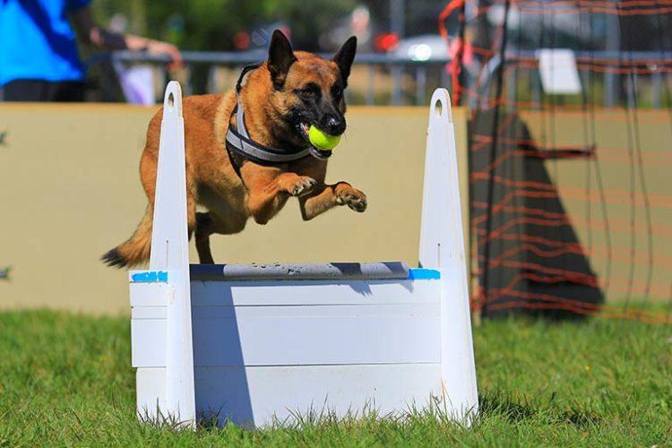 Agility Dog: tante discipline da fare con i 4 zampe!