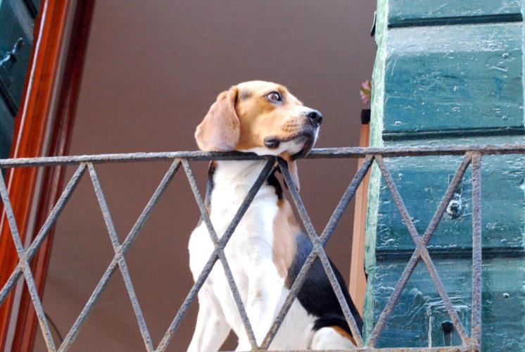 Verona: multe per chi lascia i cani sui balconi!