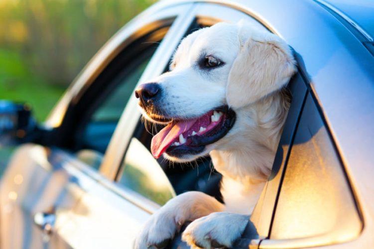 Guida all'aria condizionata con i pet...