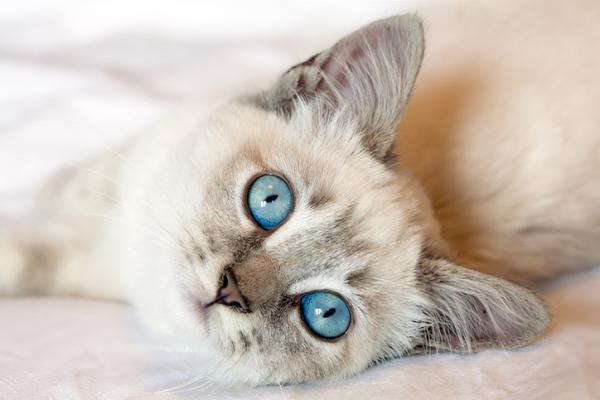 Se il gatto è Fiv positivo (cosa fare)...