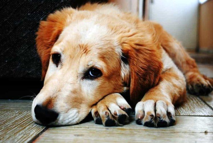 Il cane e le malattie che può trasmettere all'uomo!