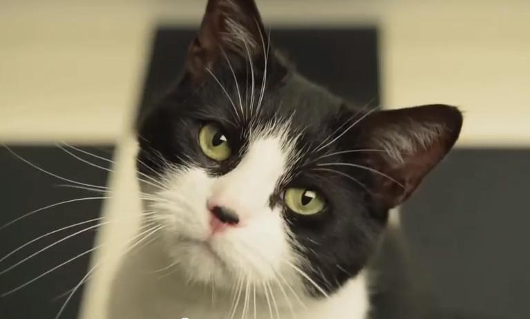 Gatto nero e bianco (senza pedigree)!