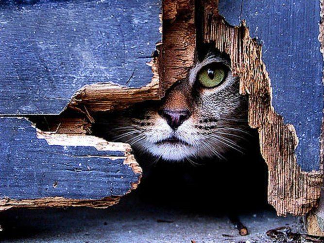 Aiuto: ho perso il gatto!