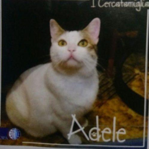 Amici di Milano, pronti ad adottare Adele?