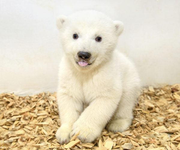 """La nuova """"stella polare"""" dello zoo di Berlino..."""