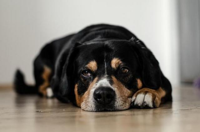 Il mio cane soffre spesso di problemi intestinali. Quali possono essere le cause e come posso aiutarlo?