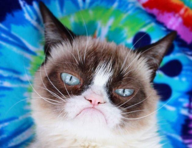 Grumpy Cat è mancata ma vivrà per sempre (nel Web)...