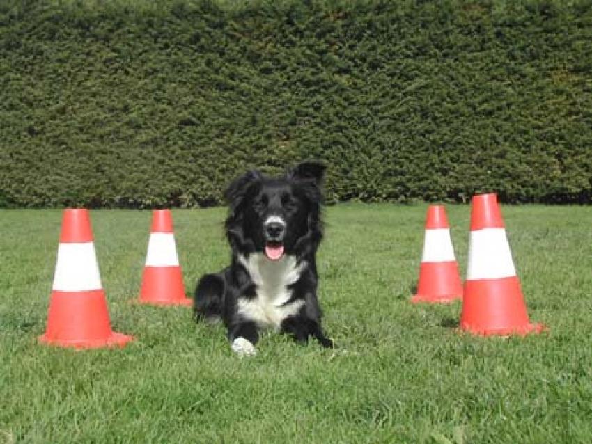 """Obedience: uno sport """"mentale"""" per il cane!"""