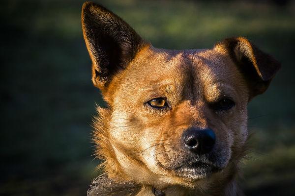 Il cane rispecchia lo stress del proprietario...