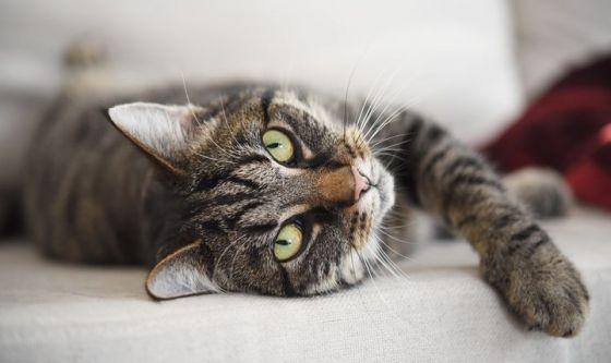 Allergia ai gatti: in arrivo il vaccino...