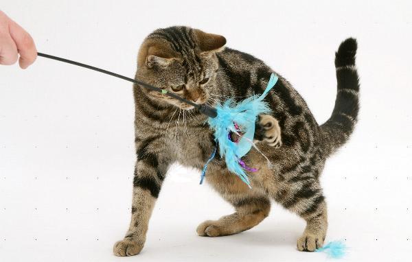 Gatti: consigli utili su come aiutarli ad affrontare l'inverno!