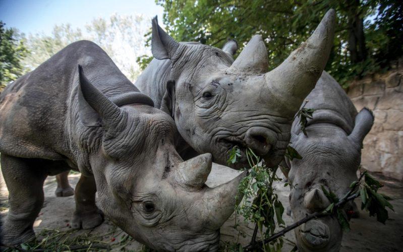 La strada verso casa dei rinoceronti...