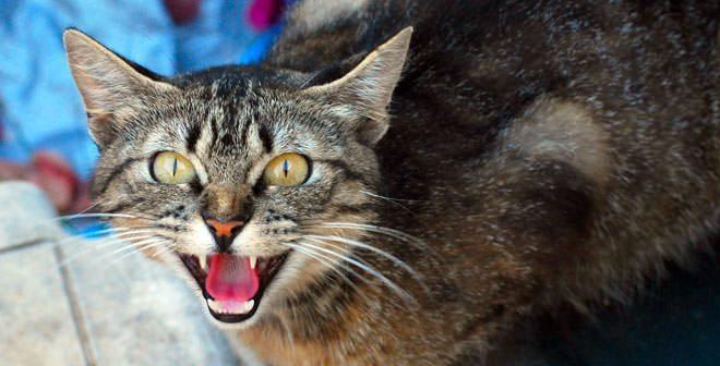 """Gatti: la """"strategia"""" del finto attacco!"""