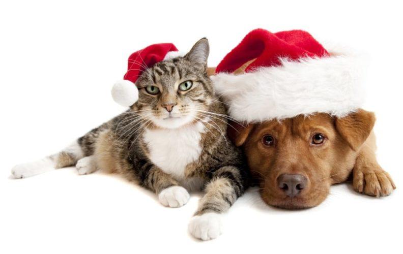Posso dare al mio cane gli avanzi del pranzo di Natale? Quale cibo devo evitare anche se a lui piace?