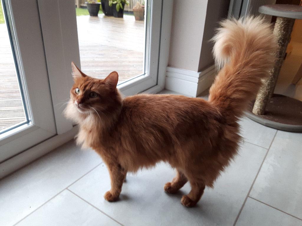 Somalo: una volpe travestita da gatto!