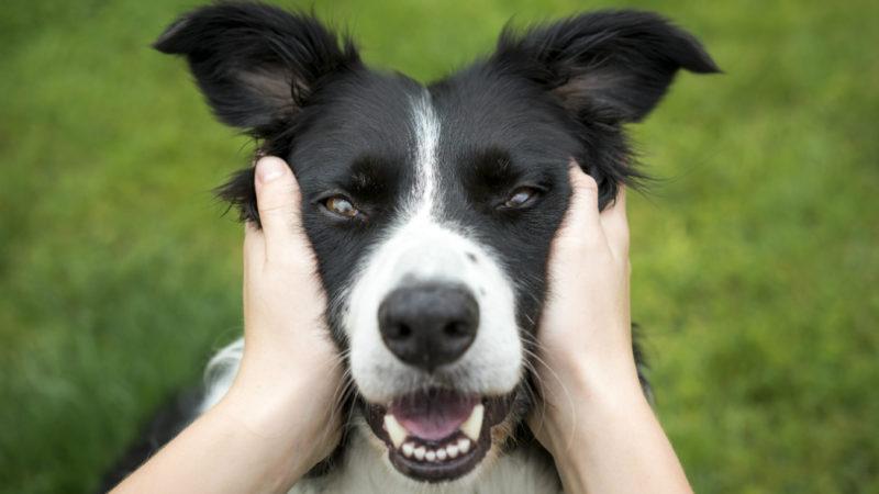 Longevità: un cane allunga la vita!