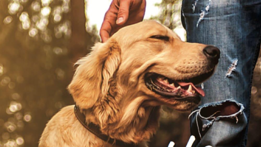 Cani e umani uniti anche nello stress…