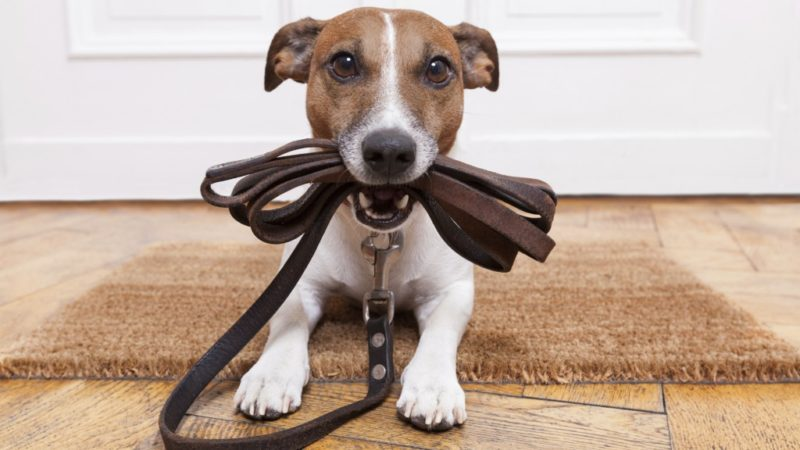 Chi è il dog sitter? Qual è la sua utilità sociale?