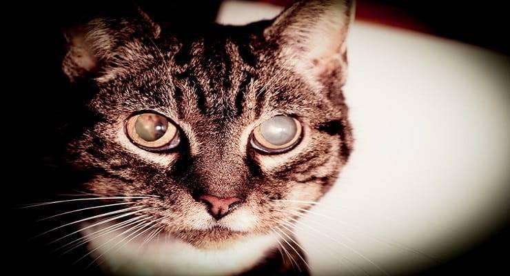 Glaucoma nel gatto (un articolo del dottor Alessandro Arrighi)…