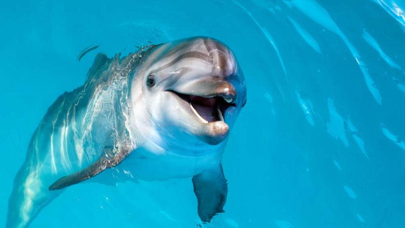 Delfino, un genio del mare!