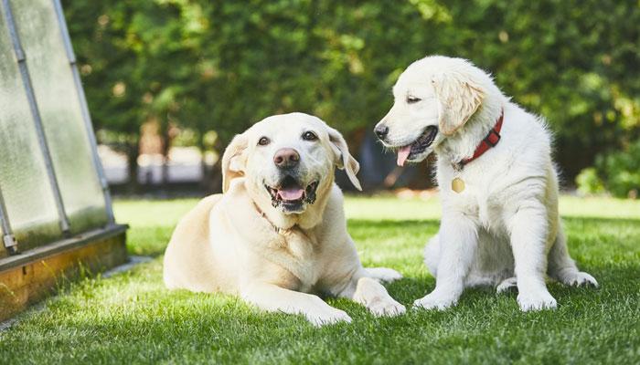 Come calcolare l'età umana del cane…
