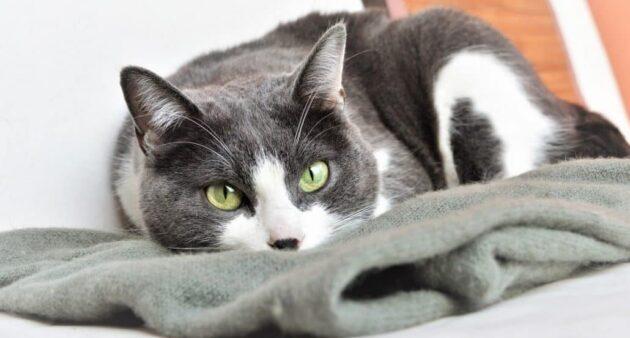 Gatto: la sterilizzazione del benessere!