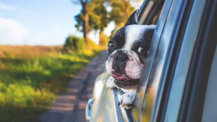Se il tuo cane ha il mal d'auto…