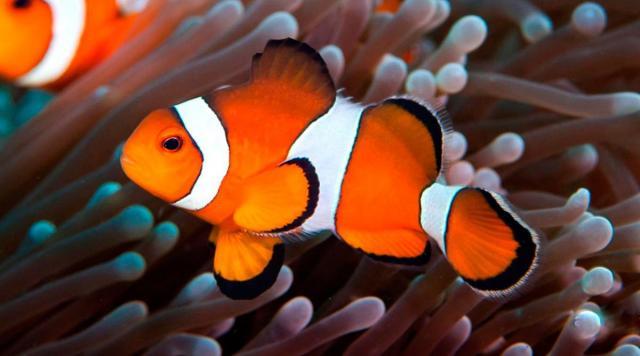 Il segreto della lunga vita di Nemo…
